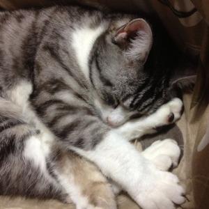 可愛い猫画像をたくさん・一気に見る