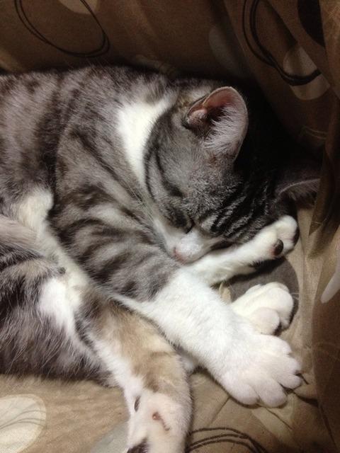 cat-sc-neko_02290